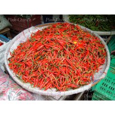 red chilies 1